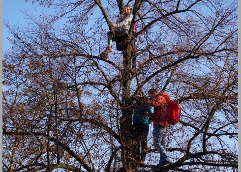 Ausblickspunkte konnten in den entlaubten Bäumen gefunden werden. Foto: K. Kountouroyanis
