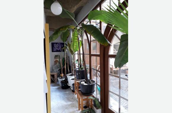Der Eingang zum Meditationsraum (Indoor Beach) erinnert an einen Wintergarten des Fin de Siècle.